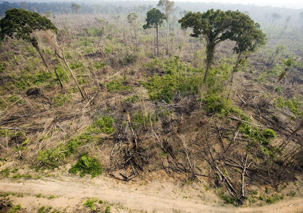 burnt-rainforest-afp